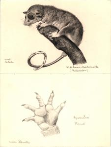 Darstellung Menschenaffen