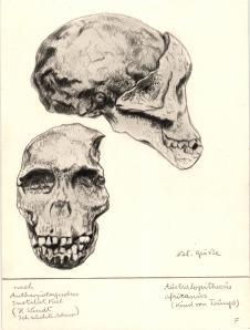 Paläöanthropologische Darstellung